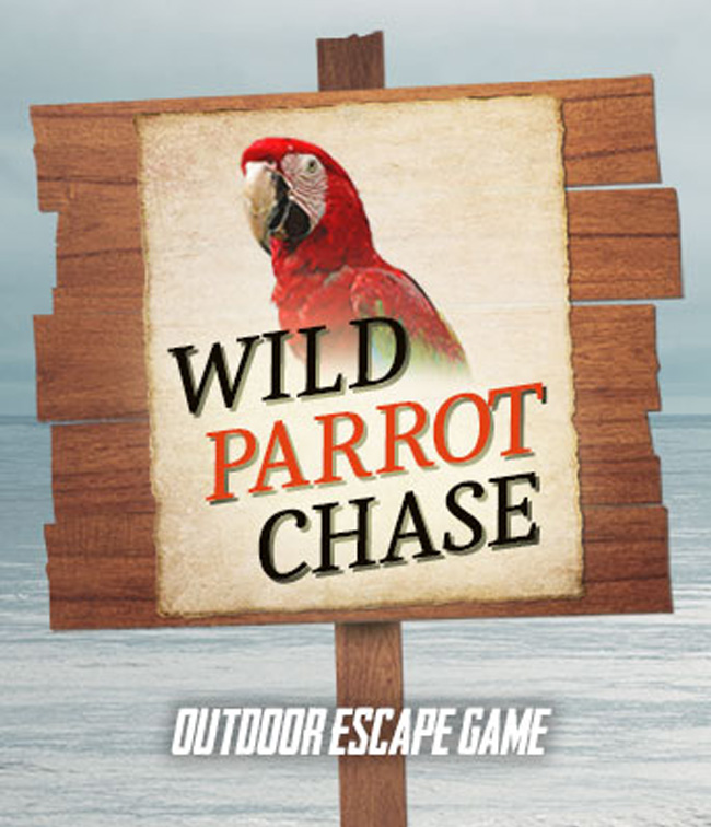 Wild Parrot Chase
